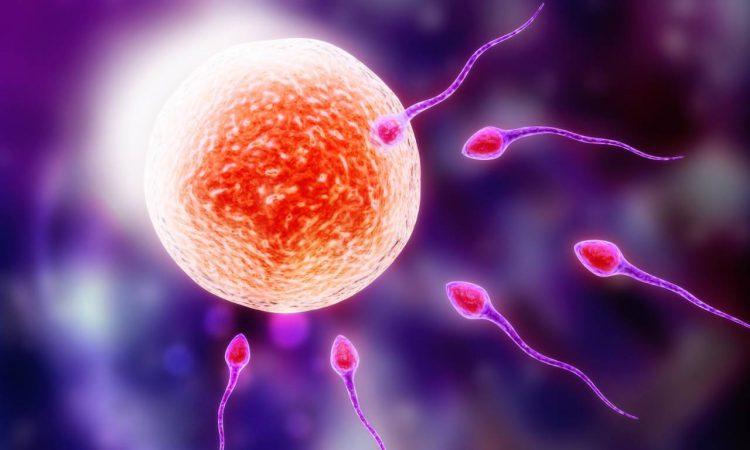 Репродукция и генетика